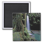 Dominica, Emerald Pool, Waterfall. Magnet