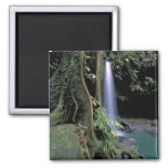 Dominica, Emerald Pool, Waterfall. Square Magnet