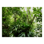 Dominican Rain Forest Poster Print