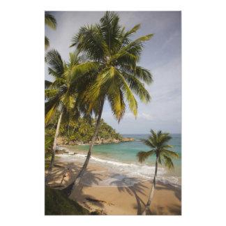 Dominican Republic, North Coast, Abreu, Playa Art Photo