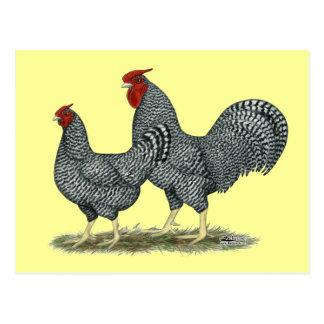 Dominique Chickens Postcard
