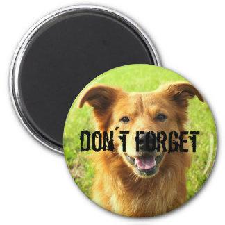 don´t forget magnet for dog