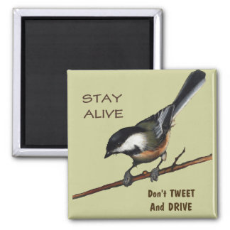 Don t Tweet Drive Bird Color Pencil Art Refrigerator Magnet