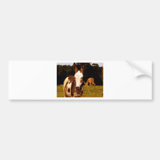 donkey-52295_1920.jpg bumper stickers