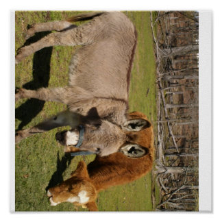 Donkey And Cow Poster