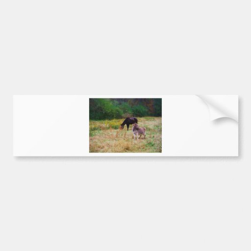Donkey and horse in a Fall Field. Bumper Stickers