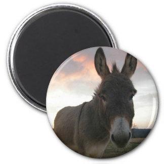 Donkey Art 6 Cm Round Magnet