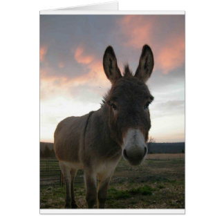Donkey Art Greeting Card
