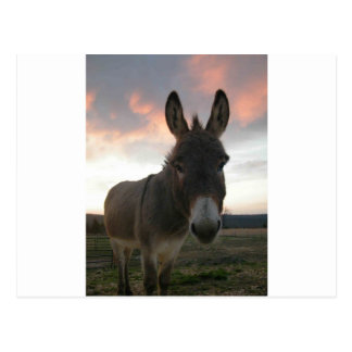 Donkey Art Postcard