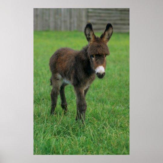 Donkey, dwarf donkey, in the ouple, portrait poster