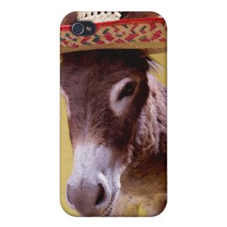 Donkey (Equus hemonius) Wearing Straw Hat iPhone 4/4S Case