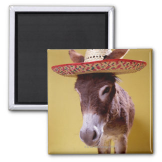 Donkey (Equus hemonius) wearing straw hat Magnet
