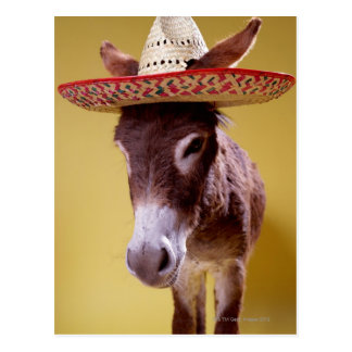Donkey (Equus hemonius) Wearing Straw Hat Postcard