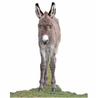 Donkey foal photosculpture standing photo sculpture