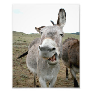 Donkey Grin Photo Print