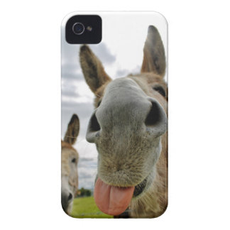 Donkey Humour iPhone 4 Covers