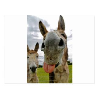 Donkey Humour Postcard