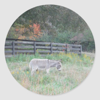 Donkey in a Fall Autumn Field. Round Sticker