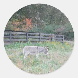 Donkey in a Fall Autumn Field. Round Sticker