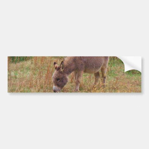 Donkey  in a Fall Field. Bumper Stickers