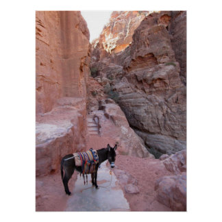 Donkey in Petra Poster