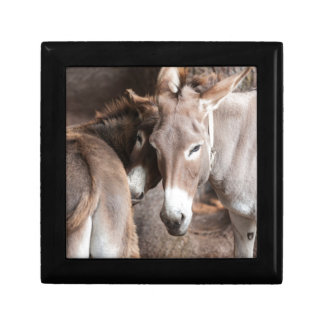 donkey in the farm gift box