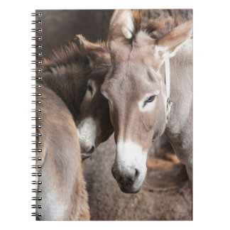 donkey in the farm notebooks