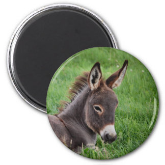 Donkey In The Grass 6 Cm Round Magnet
