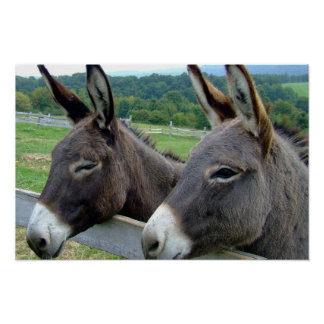 Donkey Mule Farm Animal Country Destiny Poster
