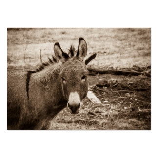 Donkey Pack Of Chubby Business Cards