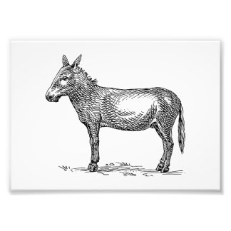 Donkey Photo Art