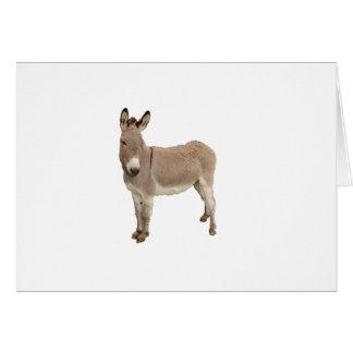 Donkey Photograph Design Greeting Cards