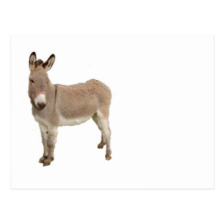 Donkey Photograph Design Postcard