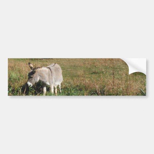 Donkey Picking Yellow Autumn Wildflowers Bumper Stickers