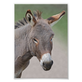 Donkey Portrait Print Photo Print
