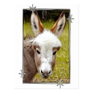 Donkey Postcard