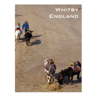 Donkey Rides On Whitby Beach, North Yorkshire Postcard