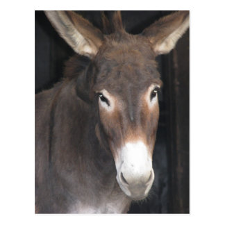 Donkey Sanctuary Postcard
