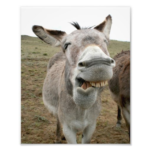 Donkey Silly Face Art Photo