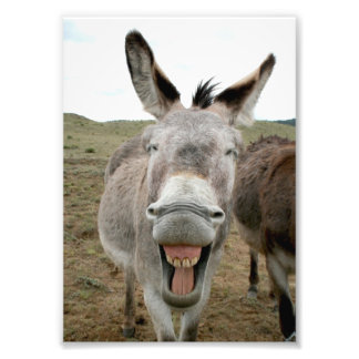 Donkey Smile Photograph