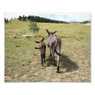 "Donkey ""Tales"" 8x10 horizontal Photo"