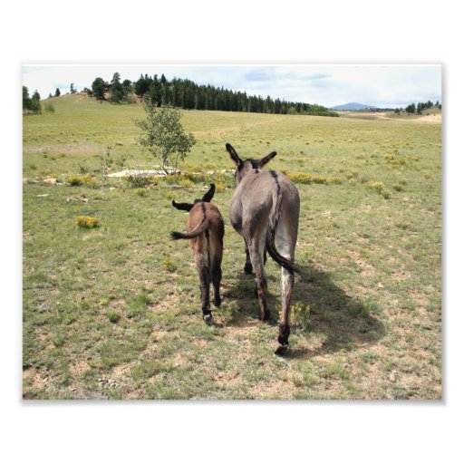 """Donkey """"Tales"""" 8x10 horizontal Photograph"""