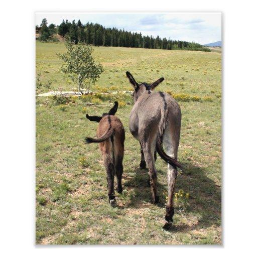 """Donkey """"Tales"""" 8x10 Art Photo"""