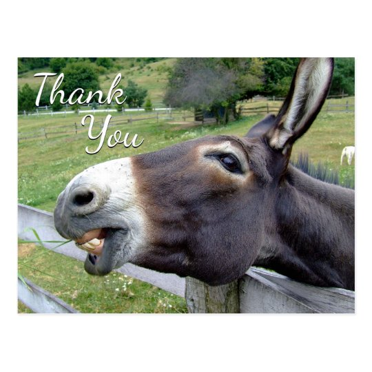 """Donkey """"Thank You"""" Whimsy Greeting Postcard"""