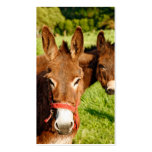 Donkeys Business Card Templates