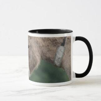 Donkeys nose-to-nose mug