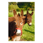 Donkeys Photo Print
