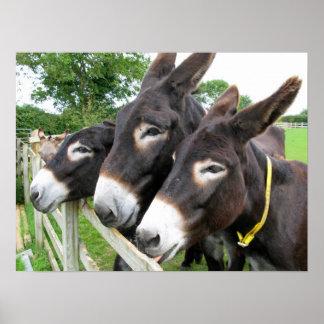 Donkeys! Poster