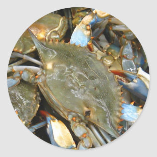 Don't Bother Me...I'm Crabby! Classic Round Sticker