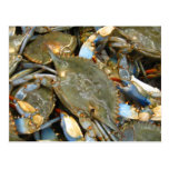 Don't Bother Me...I'm Crabby! Postcard